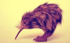 Sono solo 400 gli esemplari di Kiwi bruno rimasti in vita ora che otto di questi uccelli sono morti in Nuova Zelanda. http://tuttacronaca.wordpress.com/2013/10/02/il-kiwi-bruno-e-a-rischio-estinzione-morti-quattro-rarissimi-esemplari/
