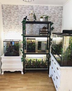 Favorite room! 🌱 #crestedgecko #correlophusciliatus #plants #bioactiveterrarium #terrarium #crestedgeckobreeder Reptile Habitat, Reptile Room, Reptile Cage, Reptile Enclosure, Reptile Tanks, Tarantula Enclosure, Les Reptiles, Cute Reptiles, Reptiles And Amphibians