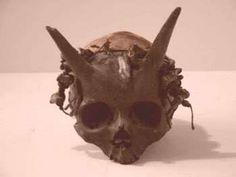 Misterioso cranio ritrovato con delle corna in USA verso la fine del 19 °secolo. Il teschio con le corna si presume essere appartenente a un…