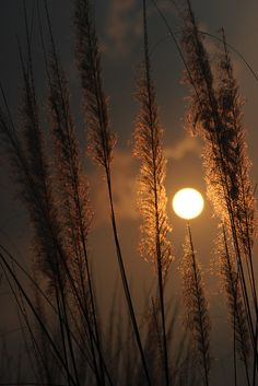 Gorgeous Harvest Moon Photos That Will Make You Love Autumn Moon Wallpaper, Sunset Wallpaper, Full Moon Photos, Moon Pictures, Harvest Moon, Really Cool Photos, Moon Photography, Landscape Photography, Autumn Nature
