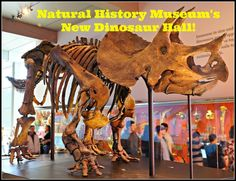 The New Dinosaur Hall at The Natural History Museum in Los Angeles! #dinosaurs #naturalhistorymuseum