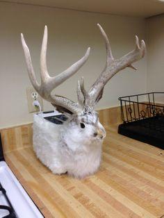My Alaskan friend gave me the best wedding gift ever: the jackalope toaster - Imgur