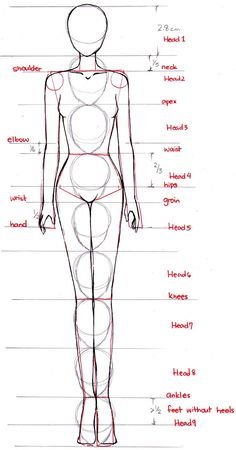 How to proportion the anime/manga/fashion style female body. -- Drawing tools, inspiration, tutorial                                                                                                                                                     More