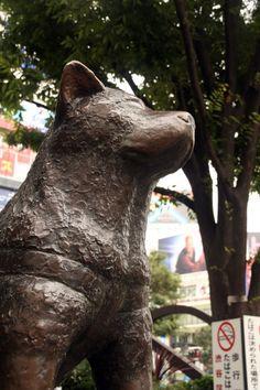 Hachiko statue, Tokyo Akita, Hachiko Statue, Famous Dogs, Dog Stories, Kos, Puppy Love, It Cast, Creatures, Puppies