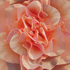 Expressionist Rose ~ painting by Michele Avanti, #flowers