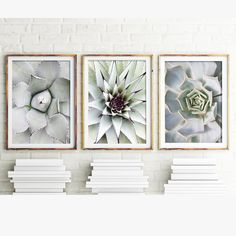 Set of 3 Cacti Prints 112d Printable Art  This is an INSTANT DOWNLOAD of a set of 3 cacti images, each photographed from above to feature the geometric crown. These contemporary cacti featuring shades of gray and soft pastel hues look fabulous side by side and make an elegant statement on any wall.  Prefer to just buy one or two of the images shown? You can view and purchase each of them here:  - View first image #112b:  https://www.etsy.com/au/listing/464202906/...