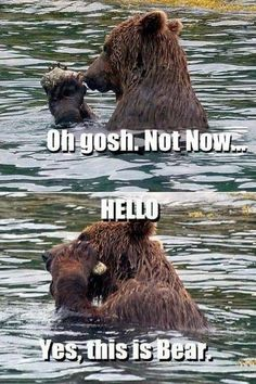 Funniest Pictures Of The Week Funny Pictures Humor And Bear Meme - 15 funny bears acting like humans