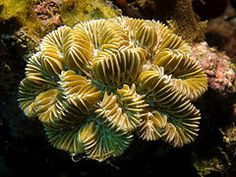 Coral reef - Wikipedia, the free encyclopedia