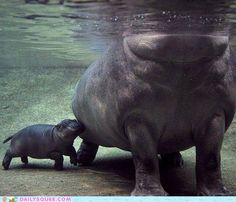 I mean...hippos.  They smile. But they can kill you.  It's impressively adorable.