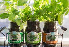 Garden-in-a-Jar (3-pack)