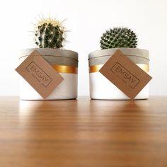 Concrete Crafts, Concrete Projects, Succulent Pots, Succulents, Decoration Cactus, House Party Decorations, Halloween Mason Jars, Pot Plante, Painted Pots