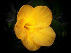 A pretty yellow one...