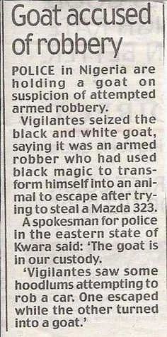 Goat accused of robbery.  Black magic was involved.
