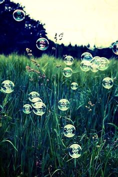Bubbles in the light! For picnic snugnarios and walks in the Cotswolds' countryside!
