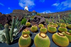 Cactus Garden I Lanzarote I Canary Islands I Spain Lanzarote, Tenerife, Voyage Canaries, Voyage Europe, Cacti And Succulents, Cactus Plants, Beach Bars, Canario, Canary Islands