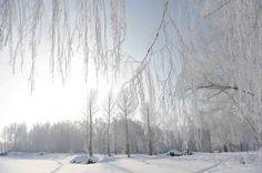 La photo prise le 10 janvier montre le paysage de givre dans le bourg Chonghu'er du district Burqin, de la région autonome ouïgoure du Xinjiang (nord-ouest)