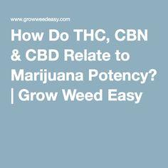 How Do THC, CBN & CBD Relate to Marijuana Potency? | Grow Weed Easy