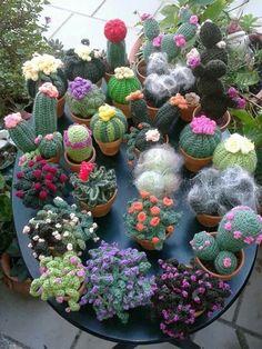 Cactuss mania!!!