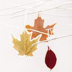 Pressed leaves make festive gift tags or #ornaments. Learn how to make them here: http://www.bhg.com/halloween/crafts/fall-crafts-with-leaves/?socsrc=bhgpin103112pressedleaves#page=4