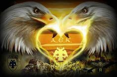 Owl, Bird, Animals, Athens, Animales, Animaux, Owls, Birds, Animal