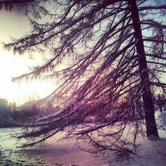 Ainolan Puisto, Oulu
