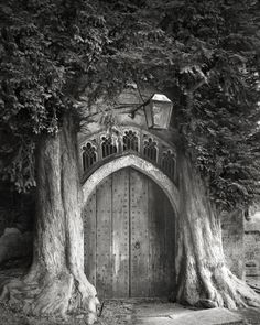 Ancient Trees: Beth Moon's 14-Year Quest to Photograph the World's Most Majestic Trees http://www.thisiscolossal.com/2014/12/ancient-trees-beth-moon/