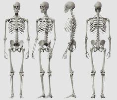 el esqueleto - Buscar con Google