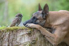 The unlikely friendship of a dog and an owl ... Ingo und Poldi oder auch Ingo und seine Freunde