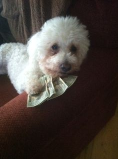Pookie works hard for his money!!