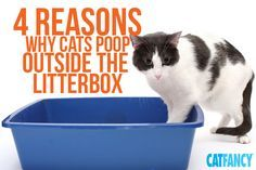 why is my cat peeing everywhere the top 5 reasons why - 600×400