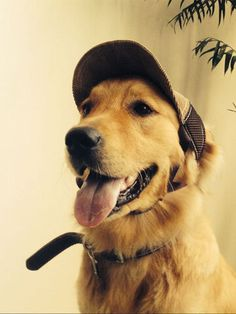 I found this amazing Adjustable Pet Baseball Hat Outdoor Travel Hat Summer Sun Protective Dog Hat with US$17.99,and 14 days return or refund guarantee protect to us. --Newchic Protective Dogs, Travel Hat, Make Money Now, Letter Patterns, Plein Air, Summer Sun, Dog Accessories, Pets, Travel