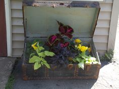 old Trunk upcycled into planter