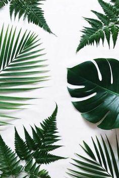 Health and Beauty. Ibiza Posidonia Cosmetics #leaves #greens #mediterraneansea #sea #deepsea #posidonia #healthandbeauty #palms #skincare #facecare #beauty #ibizaposidonia #beautycare #beautyroutine #cosmetics #naturalcosmetic #facecream #bodycare #handcare #skin #skinclean