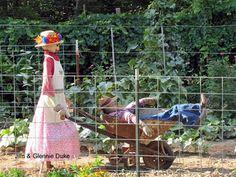 scarecrow- husband in wheelbarrow!
