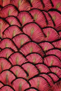 pink pattern (mykukula(