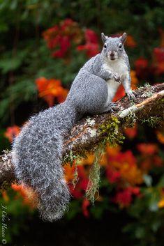 Chris The Photog: Serendipitous Squirrel