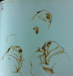 Three sketches of Camila    by Luis Vargas Saavedra Pen and bistre