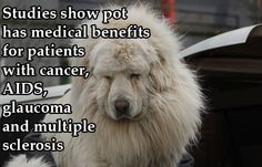 Dogs High on Weed | Facts About Marijuana: High Dogs Give 420 Crash Course (PHOTOS)
