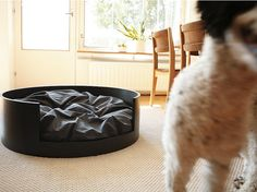 "The ""STAY"" bed, for blurry pups. 