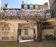 La glycine de l'hôtel de Ragueneau (Bordeaux, France) a plus de 150 ans d'âge ! © Archives Municipales de Bordeaux.