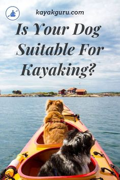 Is it ok to take your dog on a kayak or canoe? It all comes down to the temperament and personality of your canine. Different breeds react different to the water too. Here's out guide to kayaking with your pooch Kayaking With Dogs, Kayaking Tips, Canoe Trip, Beach Trip, Beach Travel, Camping And Hiking, Camping List, Backpacking Tips, Kayak Fishing