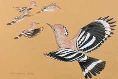 D I M Wallace SWLA -  Absolutely Fabulous-Hoopoes  Society of Wildlife Artists  31. Oct - 10. Nov 13 Mall Galleries