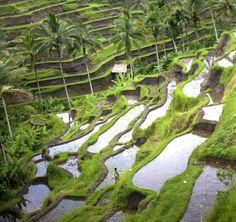 Ubud , Bali