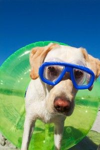 Pet friendly attractions in St Augustine Florida