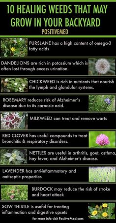 10 healing weeds that may grow in your backyard.