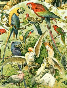 1897 Oiseaux planche originale Larousse planche par sofrenchvintage