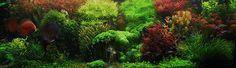 9 Best Freshwater Aquarium Plants for Beginners