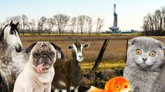 """""""What happens to Fido when fracking comes to town?"""" (blog post) (via Grist) (5 May 2014) Highlights some of the themes from a new book that looks at the impact of fracking on companion and farmed animals."""