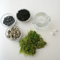 terrarium materials: Glass jar with a lid , soil, charcoal, pebbles, moss, decoration