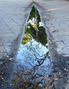 This puddle in Sydney is like a portal to another world.